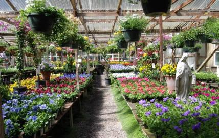 half-moon-bay-nursery