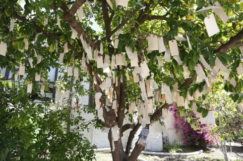 wish_tree_2013_800
